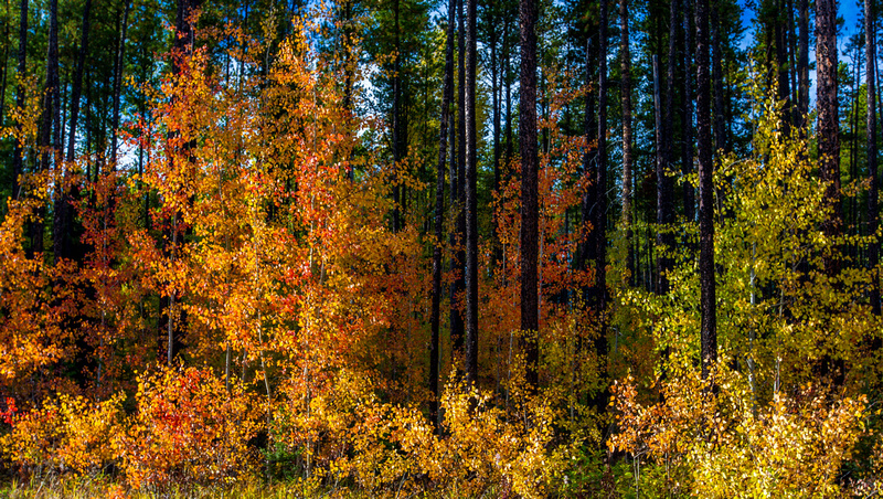 The Colour Overtakes _20150918-_MAY4023