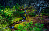 The Trickle in The Forest_20160917-_MAY6635
